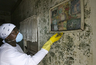 Our Machusetts Poisonous Black Mold Attorney Specialists Are Just A Phone Call Away